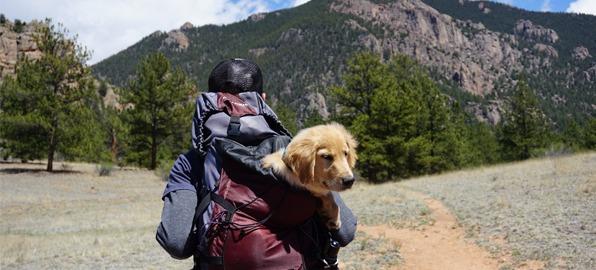 Viajar con perro: ¡Disfruta de la aventura junto a tu mejor amigo!